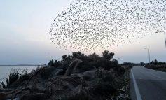 INSOLITE: Un lac pris dans une toile d'araignée  géante en Grèce