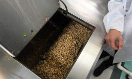 Environnement : De l'eau potable créée à partir des déchets de cannabis
