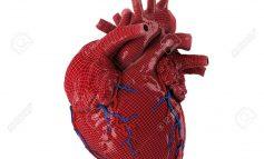 Un cœur en 3D créé à partir de fibres humaines par des scientifiques israéliens