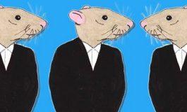 La hiérarchie chez les rats